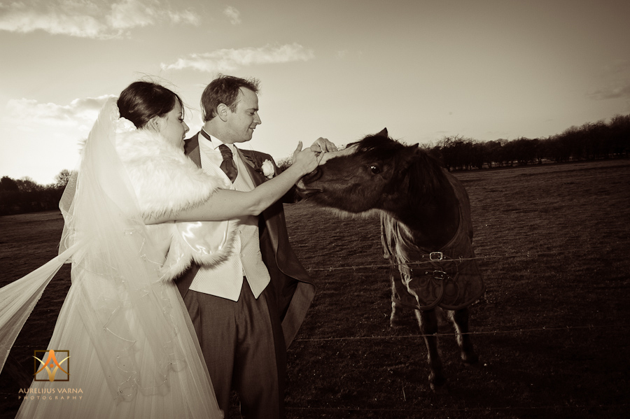 lovely horse with bride