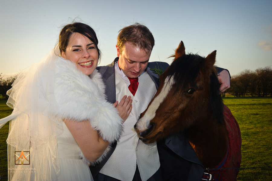 horse eating the groom